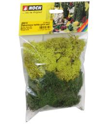 Lichen. green mix. assorted