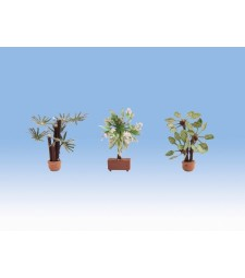 Mediterranean Plants (3 pieces)