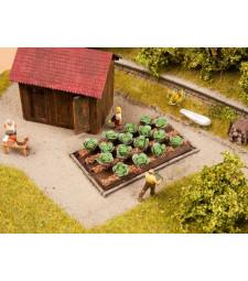Cauliflower - 3cmx6cm, 16 plants