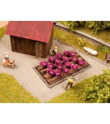 Red Cabbage - 3cmx6cm, 16 plants