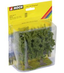 Beech Trees. 2 pcs.. 13 cm high