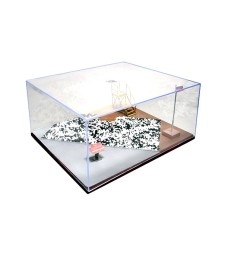 Diorama Display Case